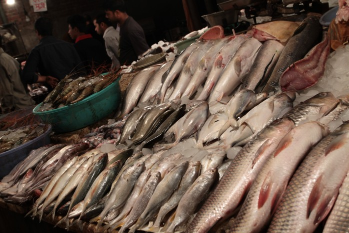 Rows of fish