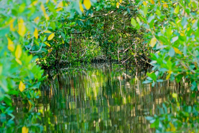 Mangrove tunnel - oil painting