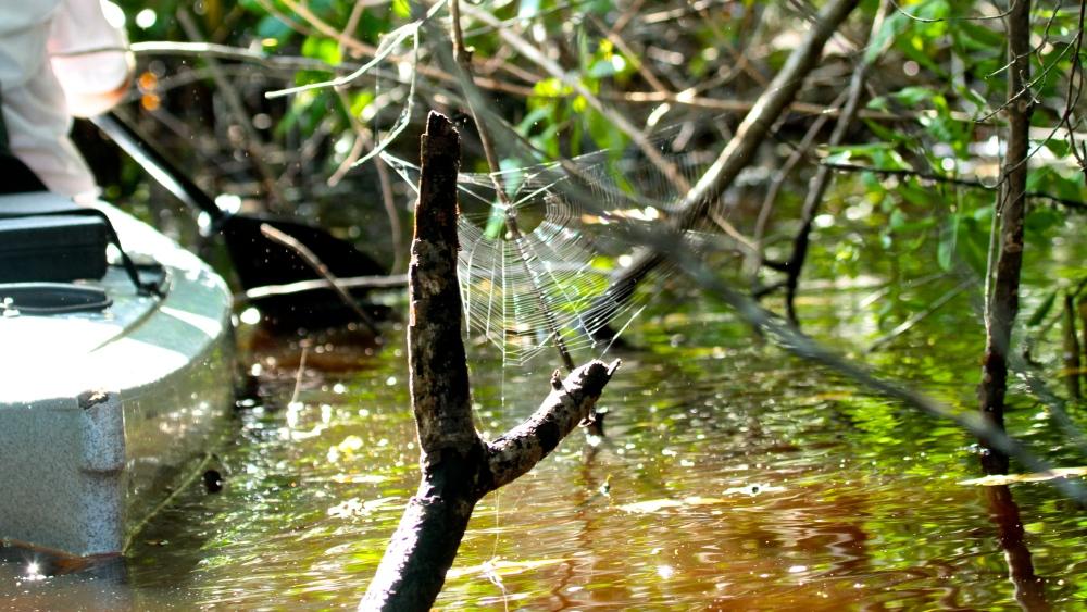 Cobwebs and kayaks. Singular