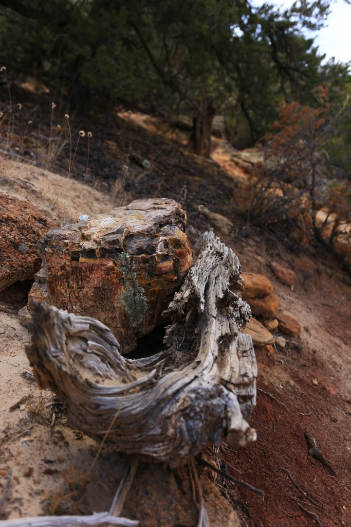 Rock & Roll: Petrified wood and a juniper trunk