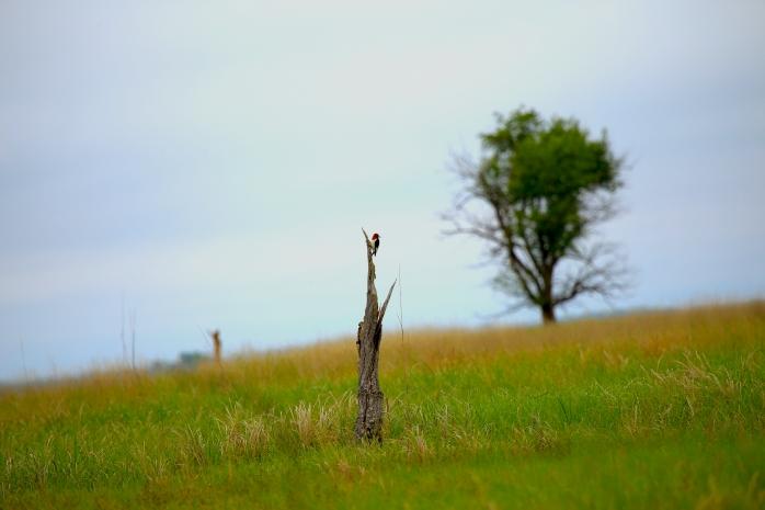 On a tree stub