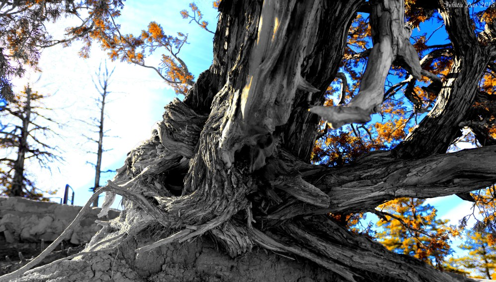 juniper crawlistic desaturated-wm