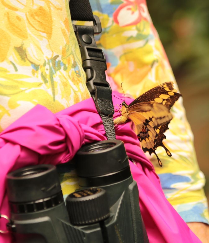 laying eggs on binocular straps