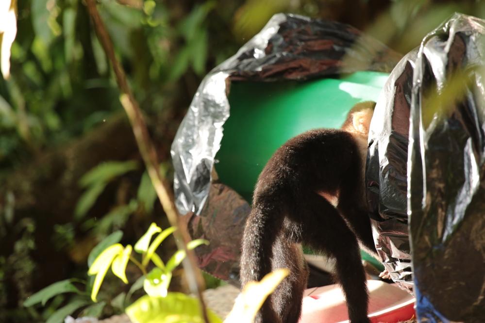 dustbin-hunting-tort