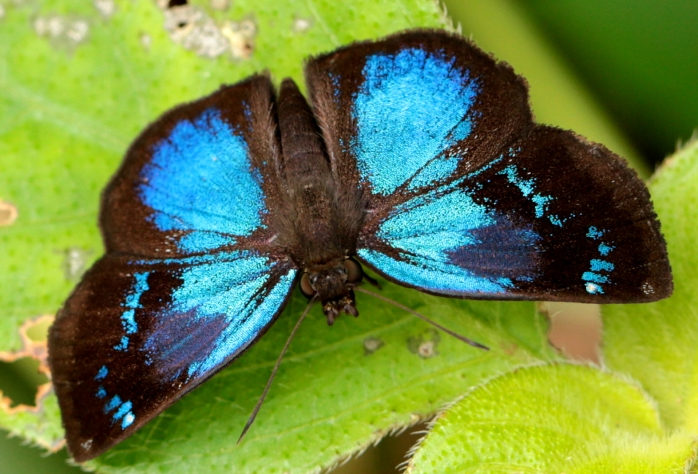 blue-butterfly-unknown