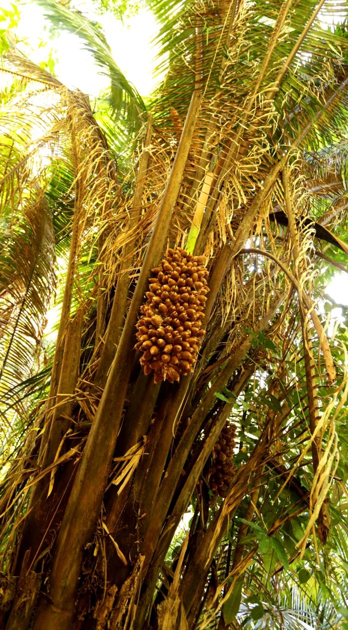 cahoon-nuts