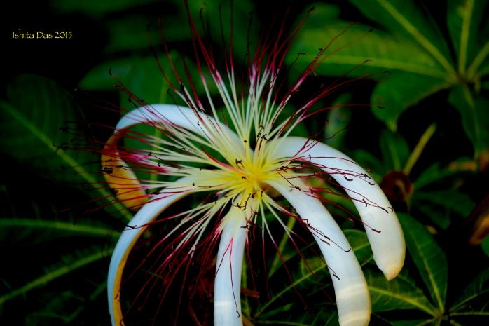 wild flower 3-wm
